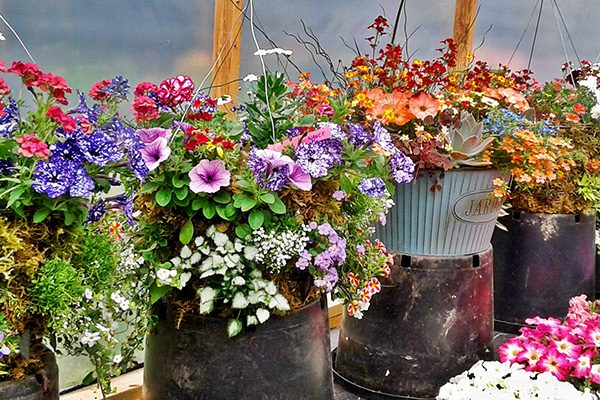 Moss-Baskets-&-Custom-Seasonal-Containers15