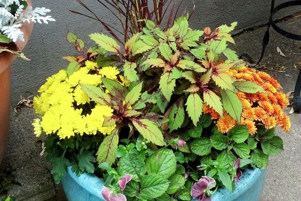 Moss-Baskets-&-Custom-Seasonal-Containers2