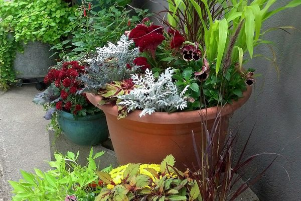 Moss-Baskets-&-Custom-Seasonal-Containers4